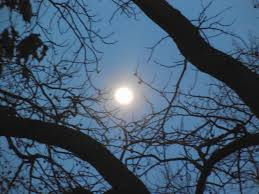 Blog_Photo_FullSnowMoonwithTree