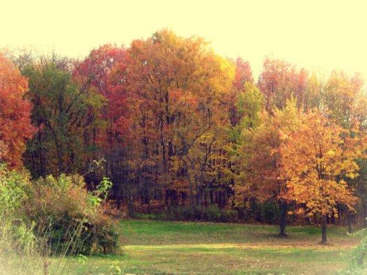 Flo_AutumnFoilage