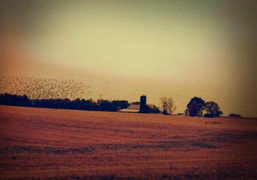Flo_AutumnLandscapeBarn