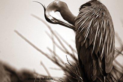 Flo_Bird1