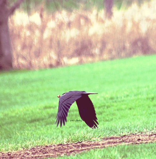 Flo_BirdFlying