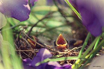 Flo_BirdsBaby