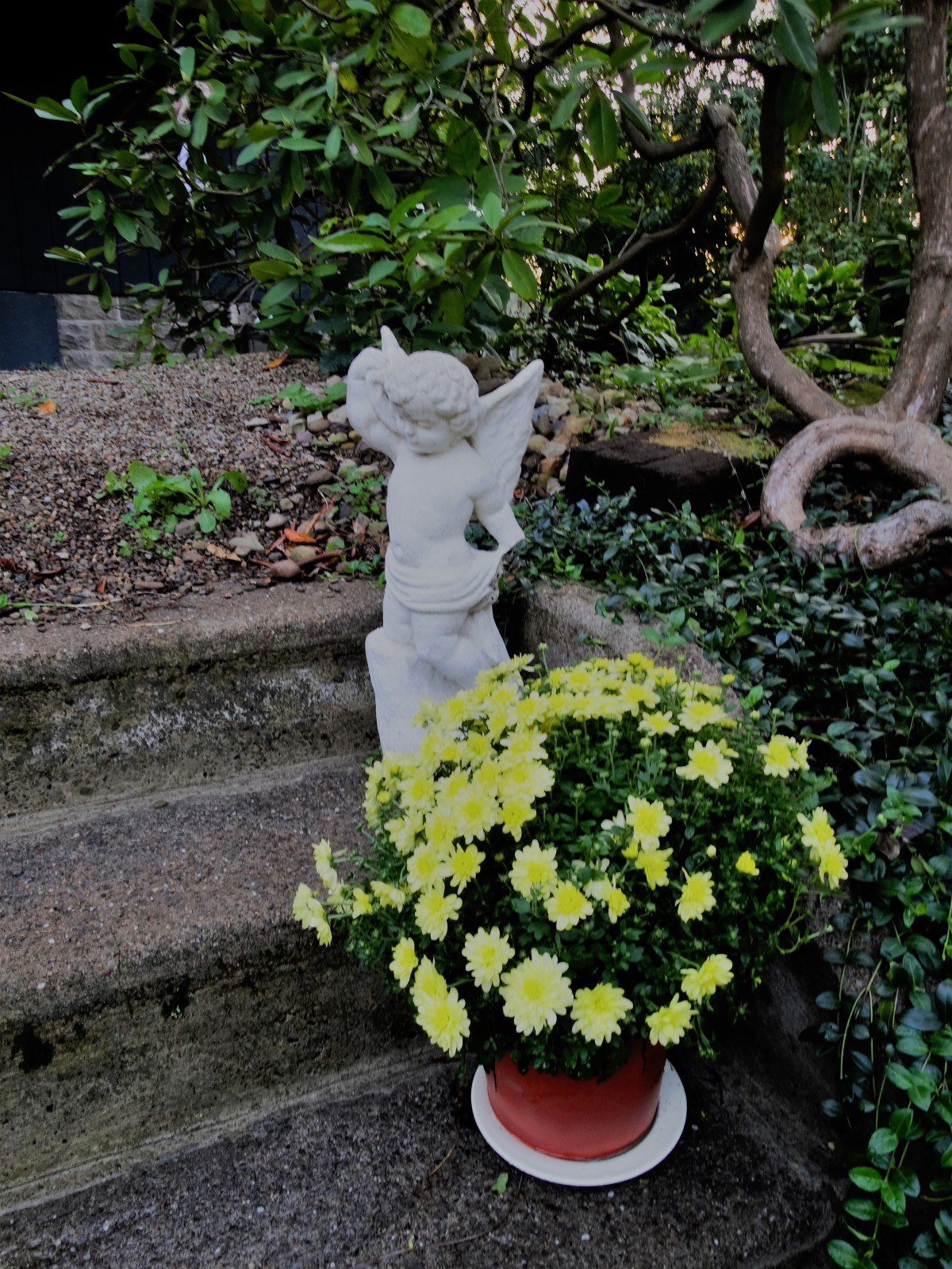 Puti Statue on stone stairway, a pot full of yellow mums -
